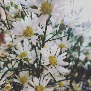cómo hacer que tus flores duren más tiempo frescas